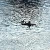 Kieler Flipper in der Schwentine vor der Schmerzklinik Kiel (2)