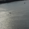 Kieler Flipper in der Schwentine vor der Schmerzklinik Kiel (6)