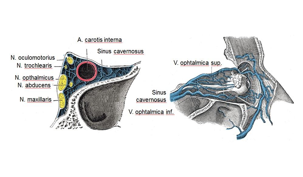 Sinus Bedingungen und Sinus Anatomie | Medizin Deutschland